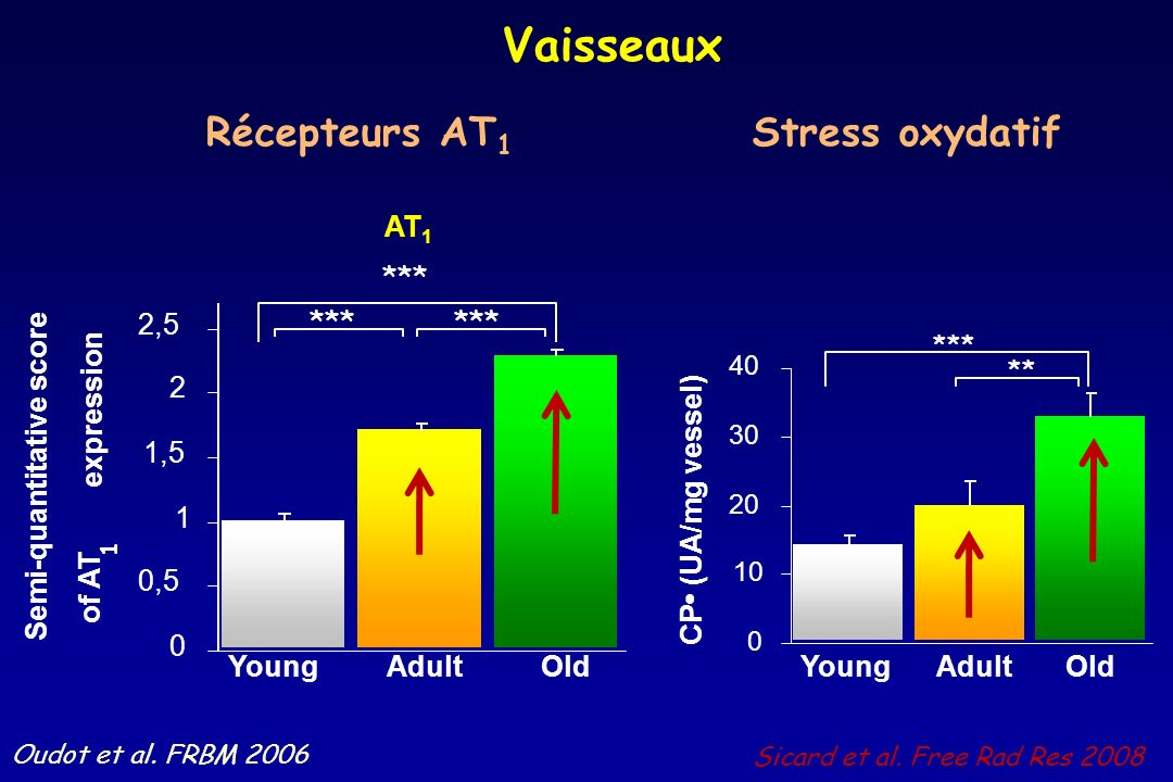 Vaisseaux Récepteurs AT1 Stress oxydatif expression Young Adult Old