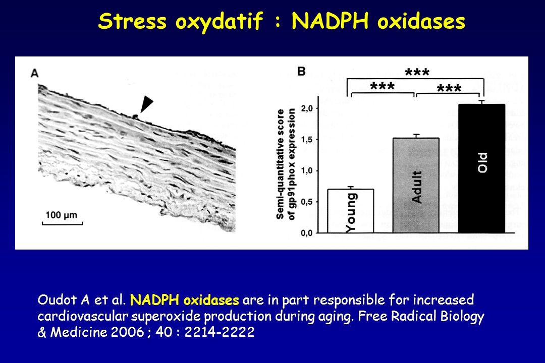 Stress oxydatif : NADPH oxidases