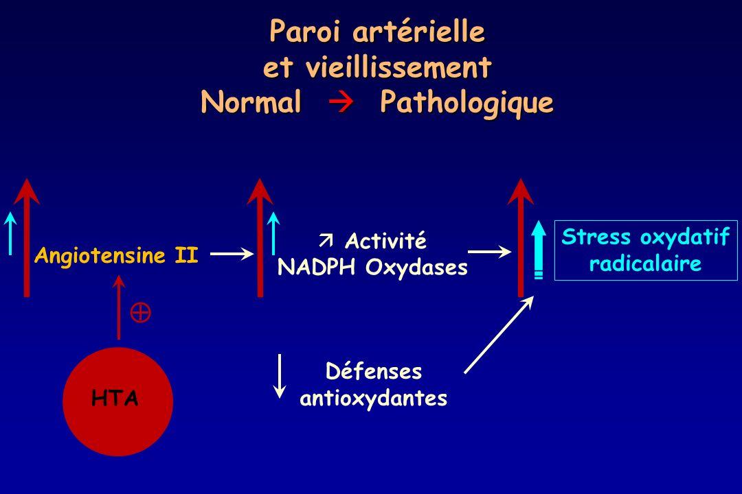 Paroi artérielle et vieillissement Normal  Pathologique