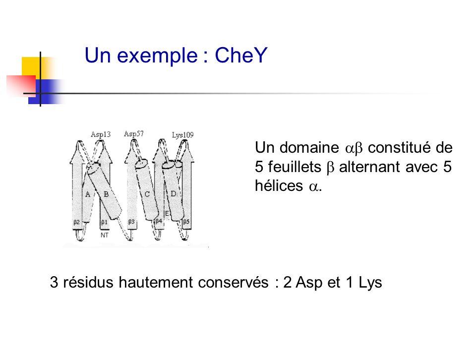 Un exemple : CheY Un domaine ab constitué de