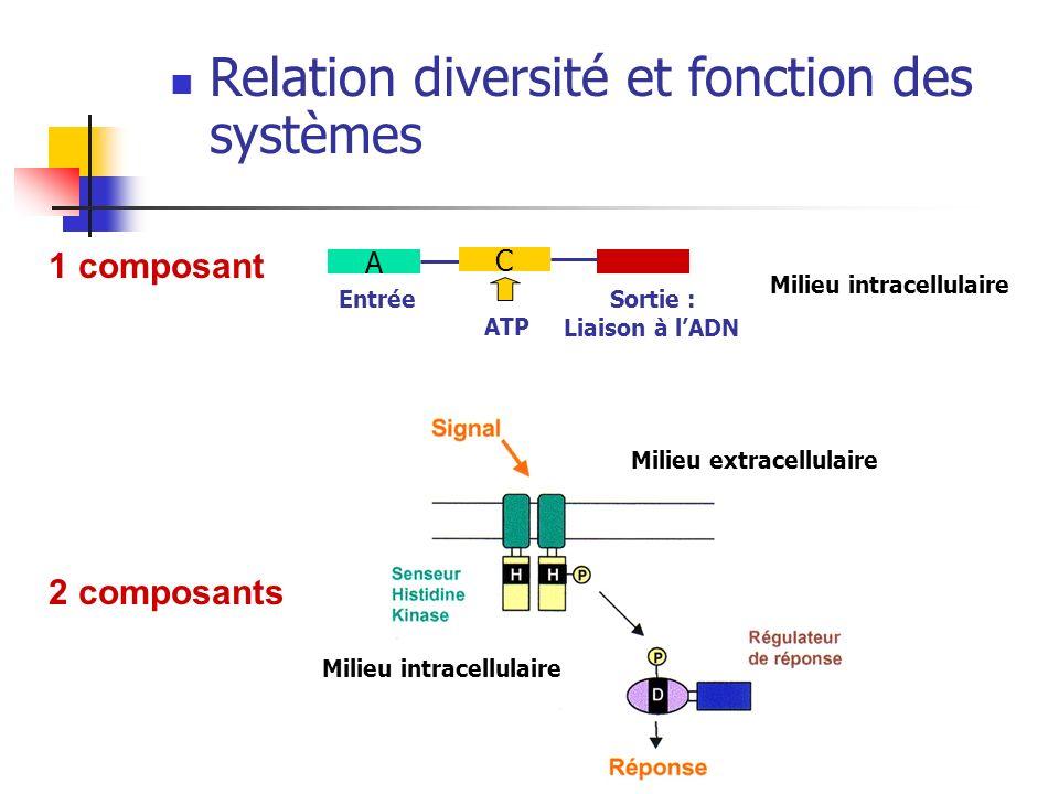 Relation diversité et fonction des systèmes