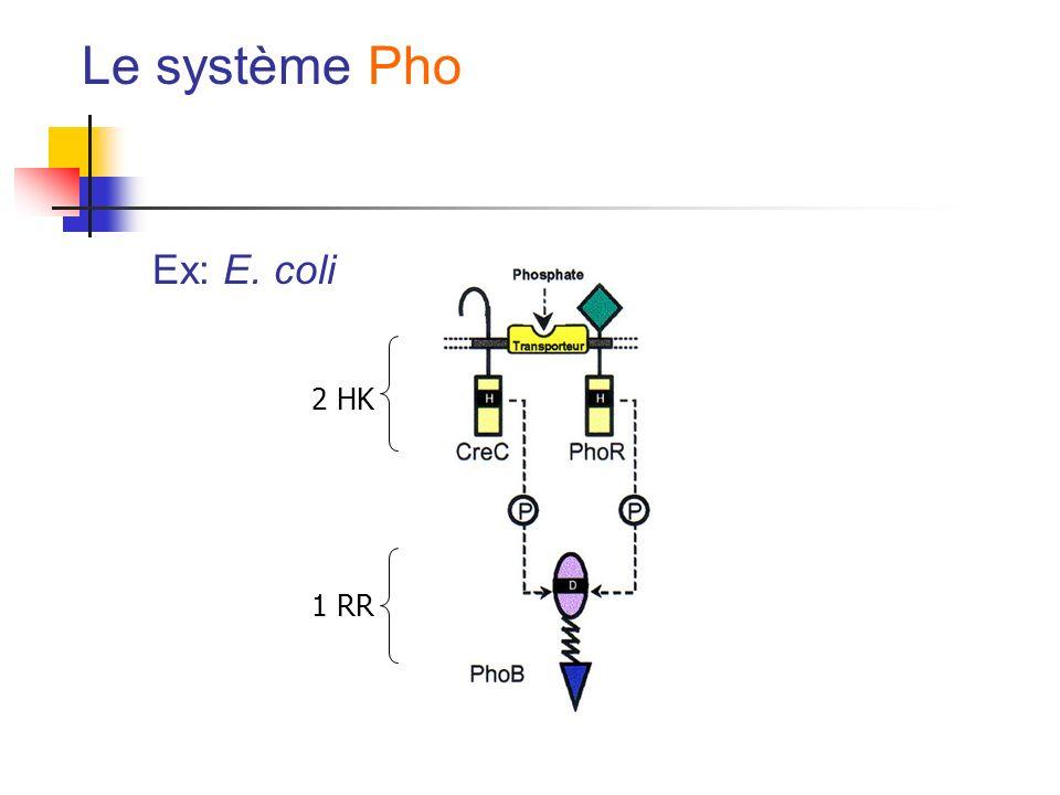 Le système Pho Ex: E. coli 2 HK 1 RR