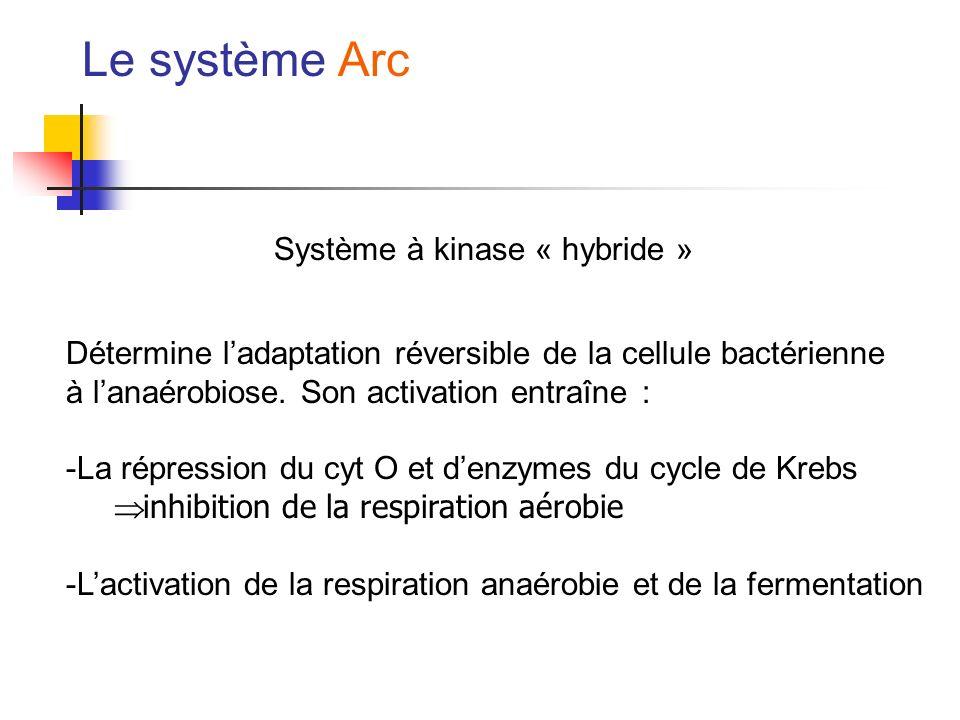 Le système Arc Système à kinase « hybride »