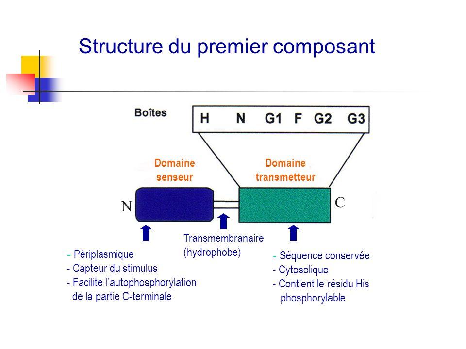Structure du premier composant