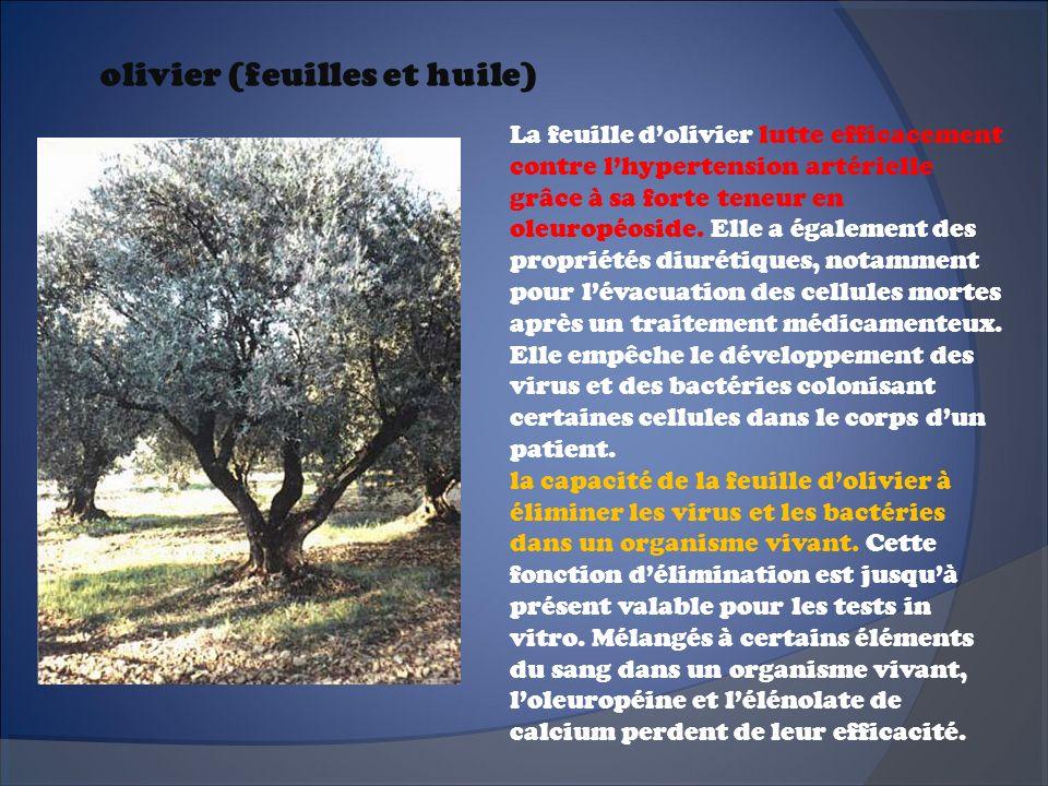 olivier (feuilles et huile)