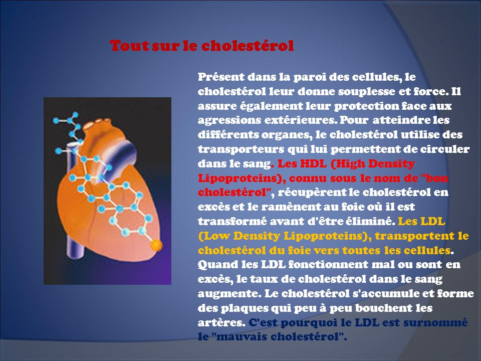 Tout sur le cholestérol
