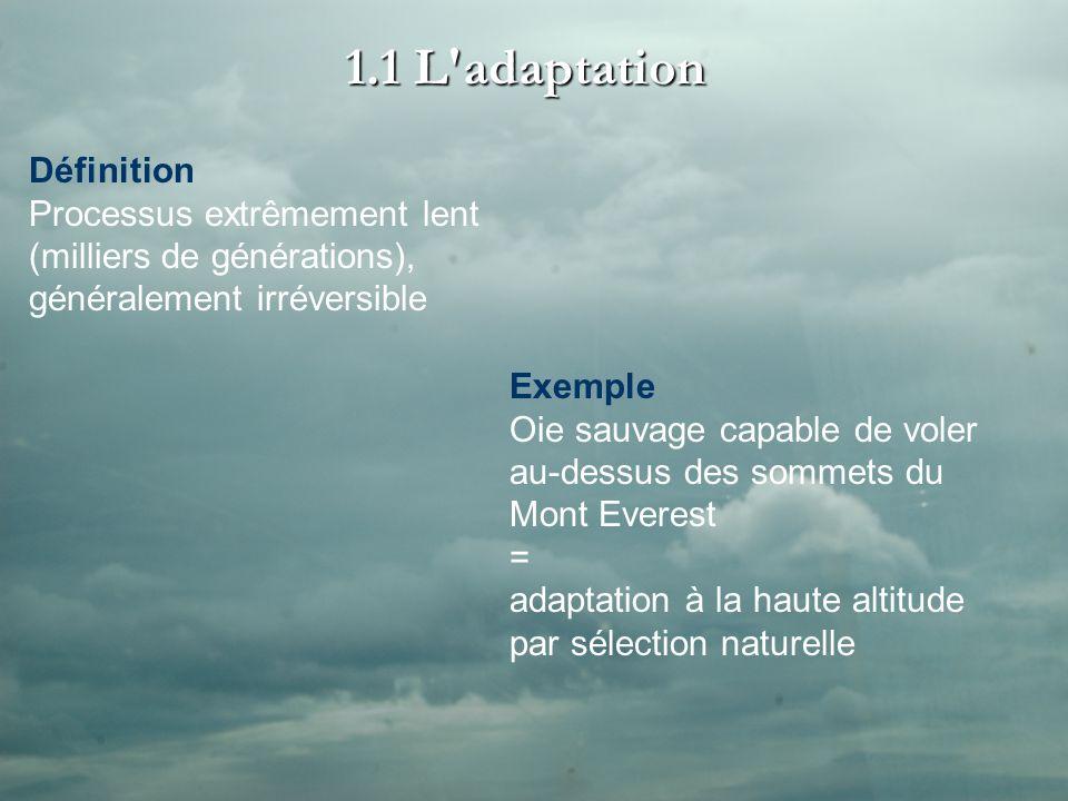 1.1 L adaptation Définition