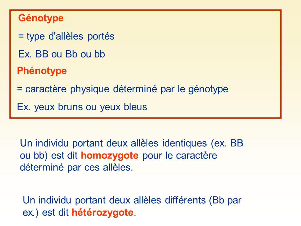 Génotype = type d allèles portés. Ex. BB ou Bb ou bb. Phénotype. = caractère physique déterminé par le génotype.