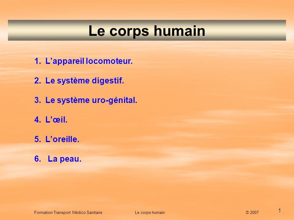 Le corps humain L'appareil locomoteur. Le système digestif.