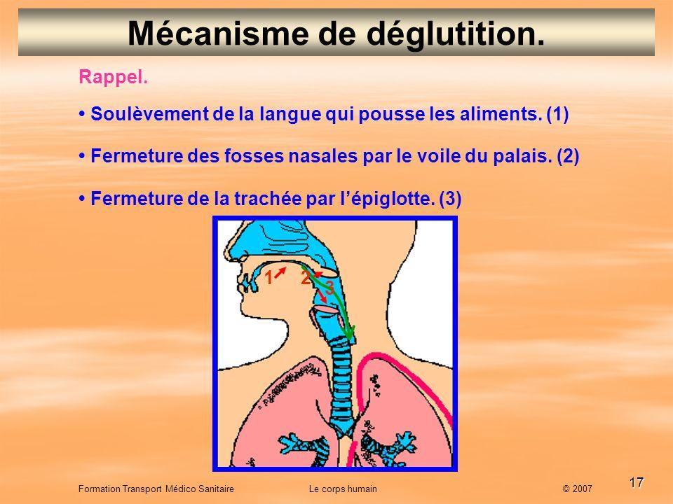Mécanisme de déglutition.
