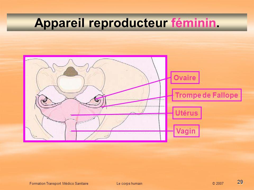 Appareil reproducteur féminin.
