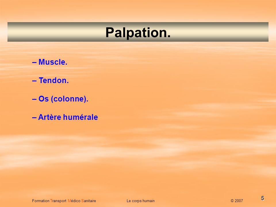 Palpation. – Muscle. – Tendon. – Os (colonne). – Artère humérale