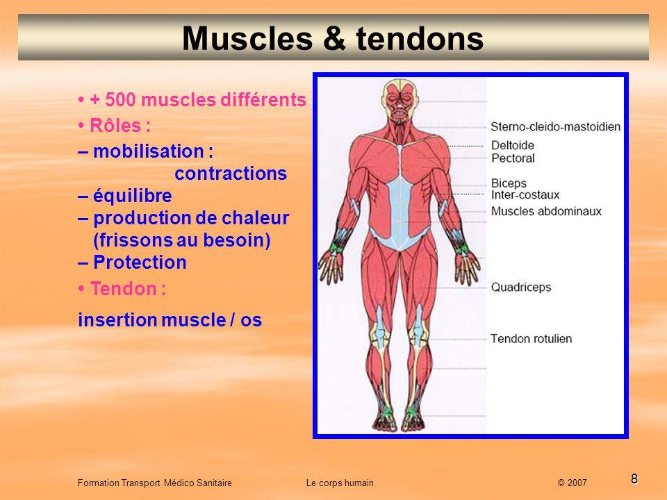 Muscles & tendons • + 500 muscles différents • Rôles :