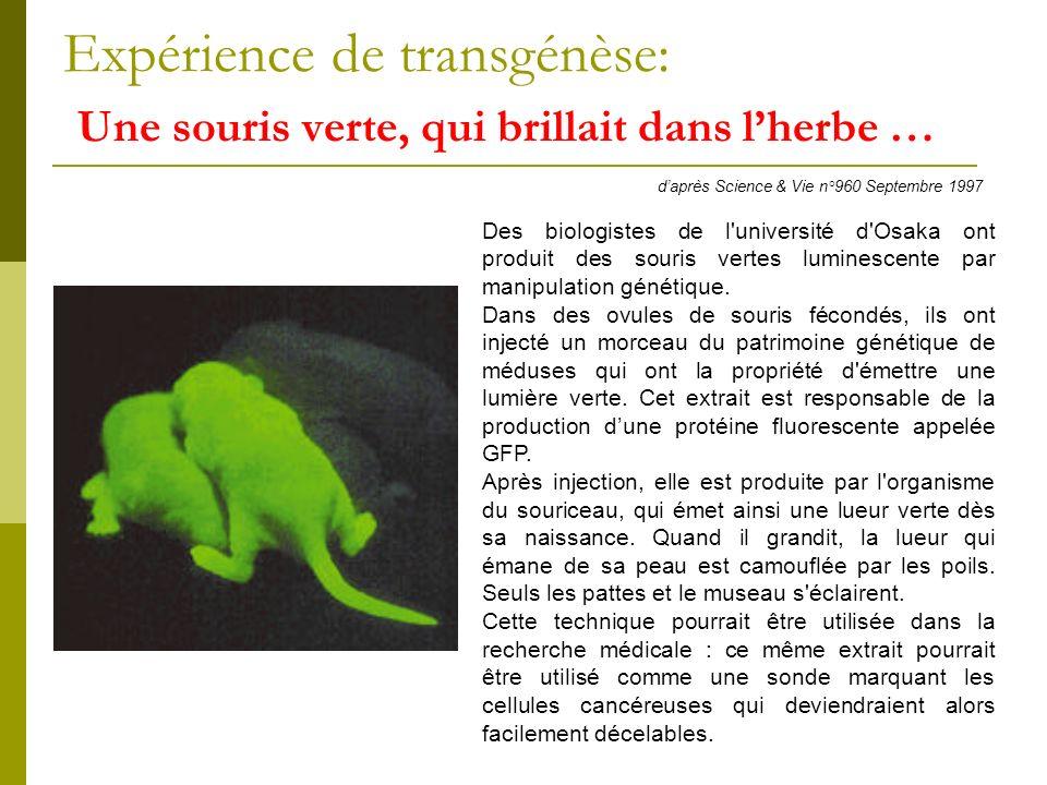 Expérience de transgénèse: Une souris verte, qui brillait dans l'herbe …