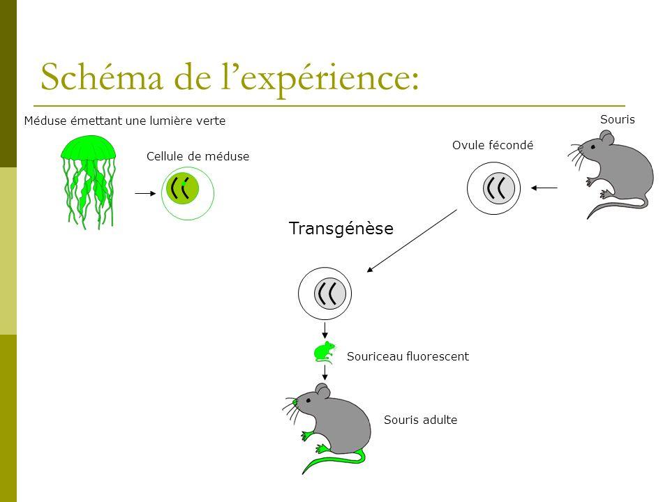 Schéma de l'expérience: