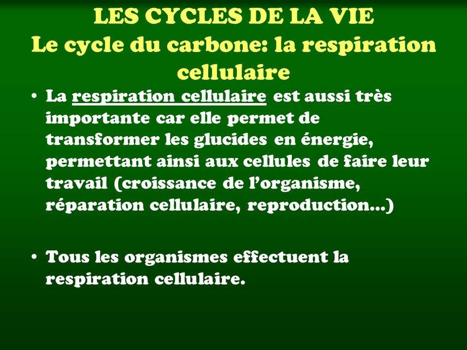 LES CYCLES DE LA VIE Le cycle du carbone: la respiration cellulaire