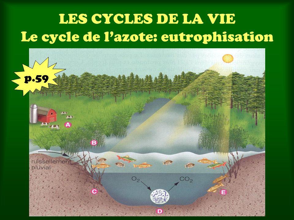 LES CYCLES DE LA VIE Le cycle de l'azote: eutrophisation