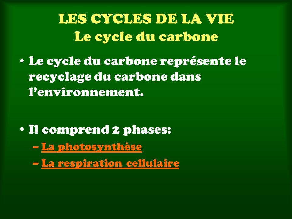 LES CYCLES DE LA VIE Le cycle du carbone