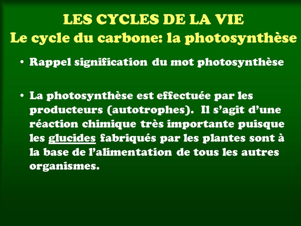 LES CYCLES DE LA VIE Le cycle du carbone: la photosynthèse