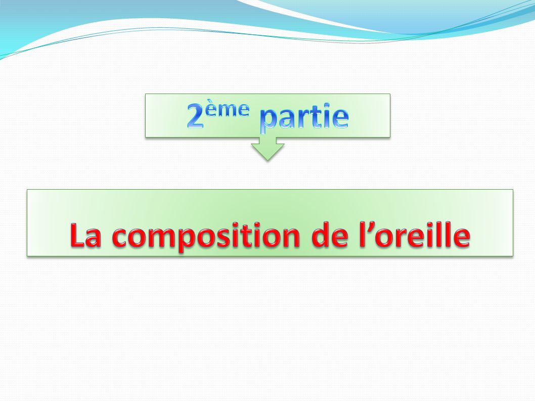 La composition de l'oreille