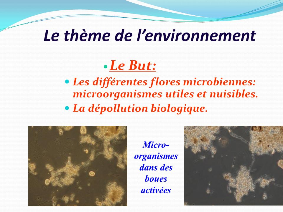 Le thème de l'environnement