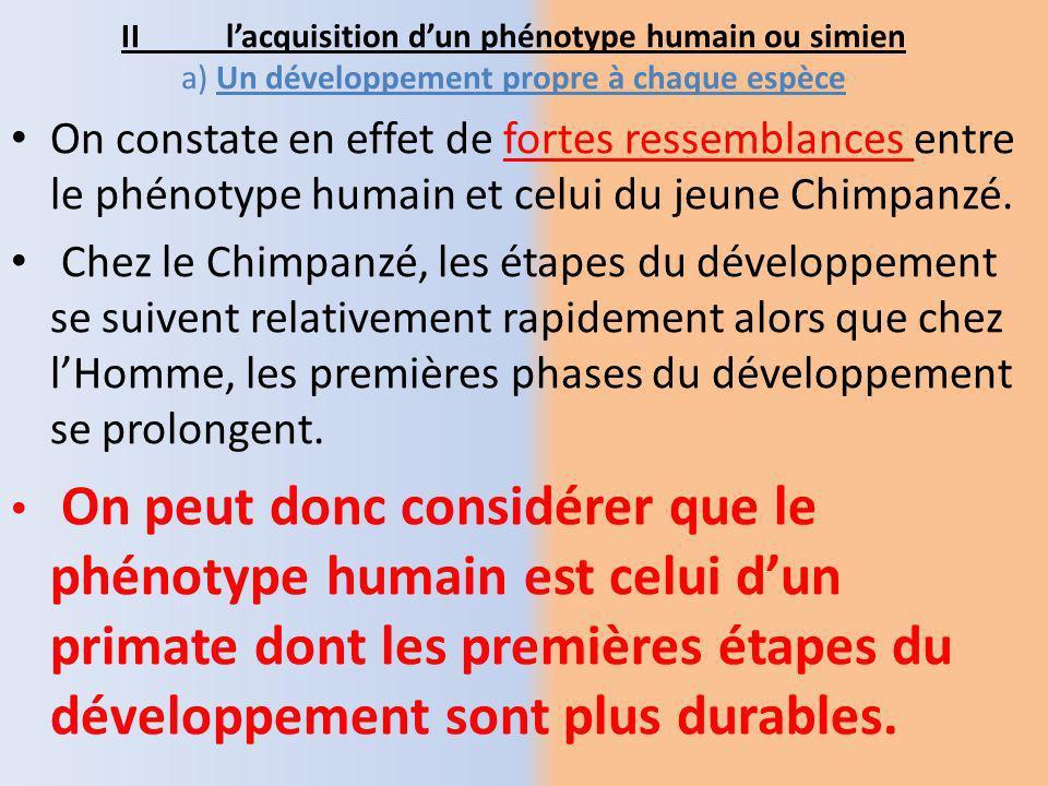 II l'acquisition d'un phénotype humain ou simien a) Un développement propre à chaque espèce
