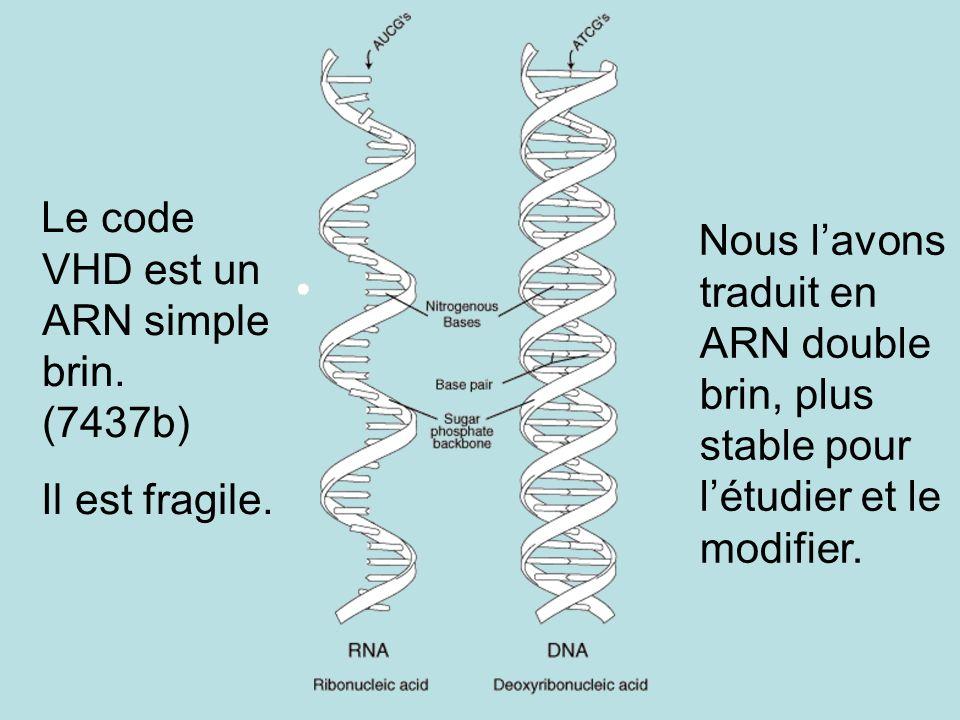 Le code VHD est un ARN simple brin. (7437b)