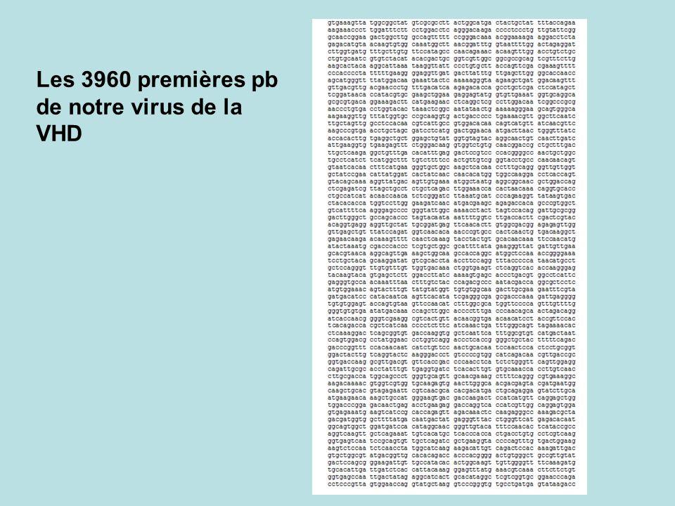 Les 3960 premières pb de notre virus de la VHD