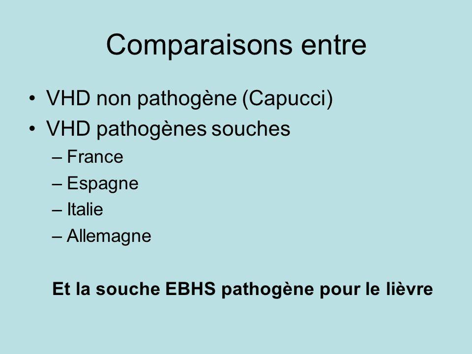 Comparaisons entre VHD non pathogène (Capucci) VHD pathogènes souches