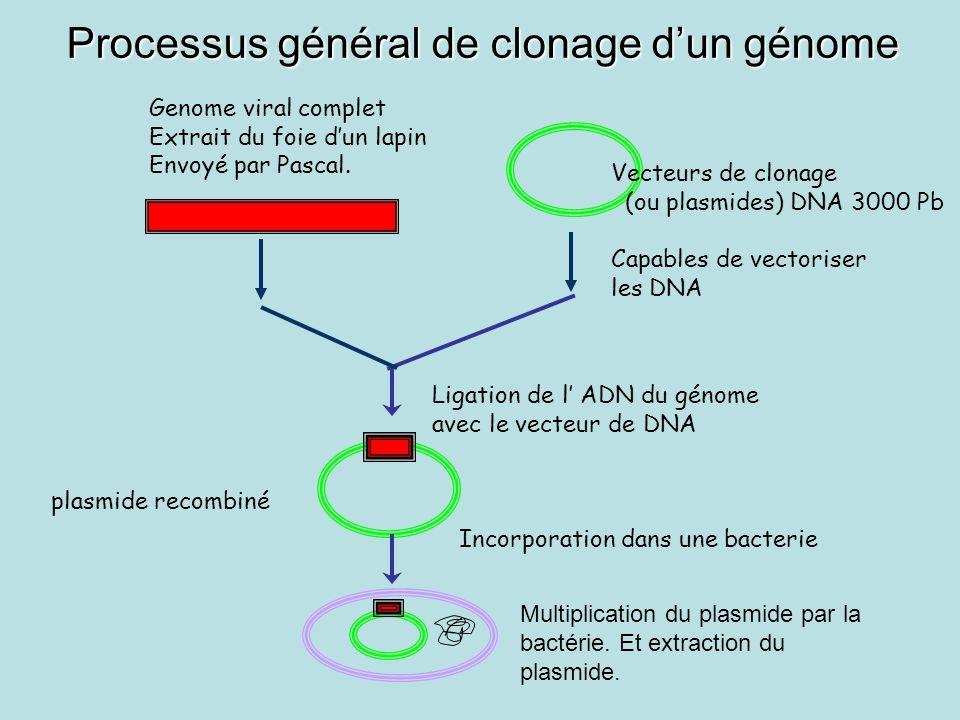 Processus général de clonage d'un génome