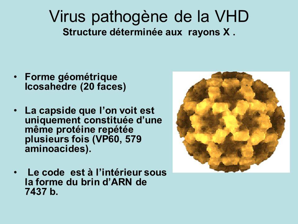 Virus pathogène de la VHD Structure déterminée aux rayons X .