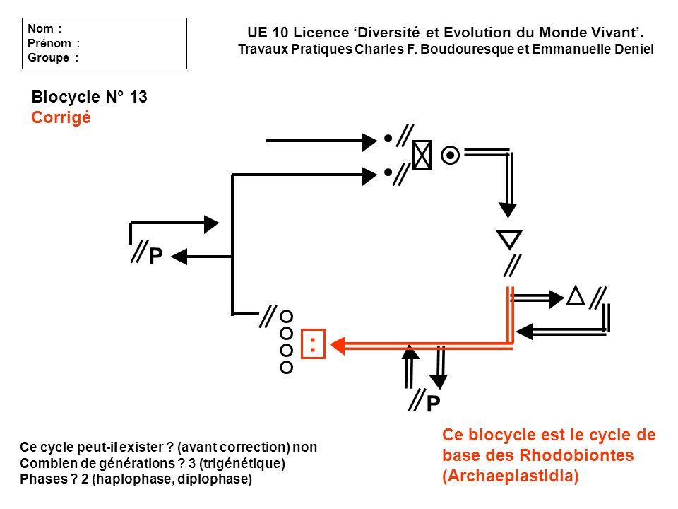 : P P Biocycle N° 13 Corrigé