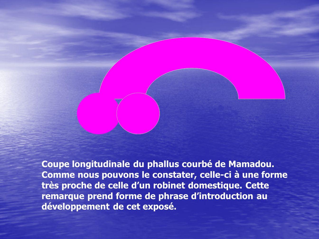 Coupe longitudinale du phallus courbé de Mamadou