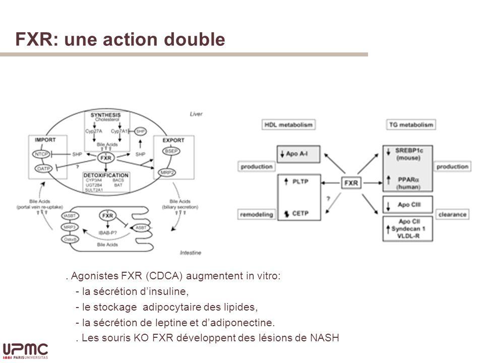 FXR: une action double Homéostasie des acides biliaires