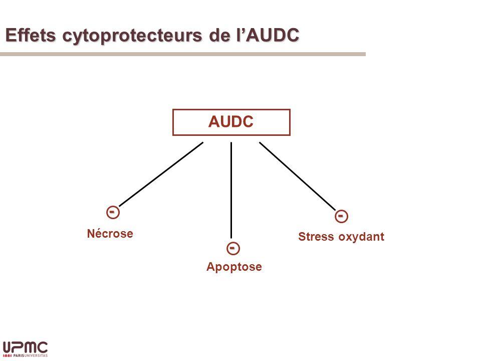 Effets cytoprotecteurs de l'AUDC