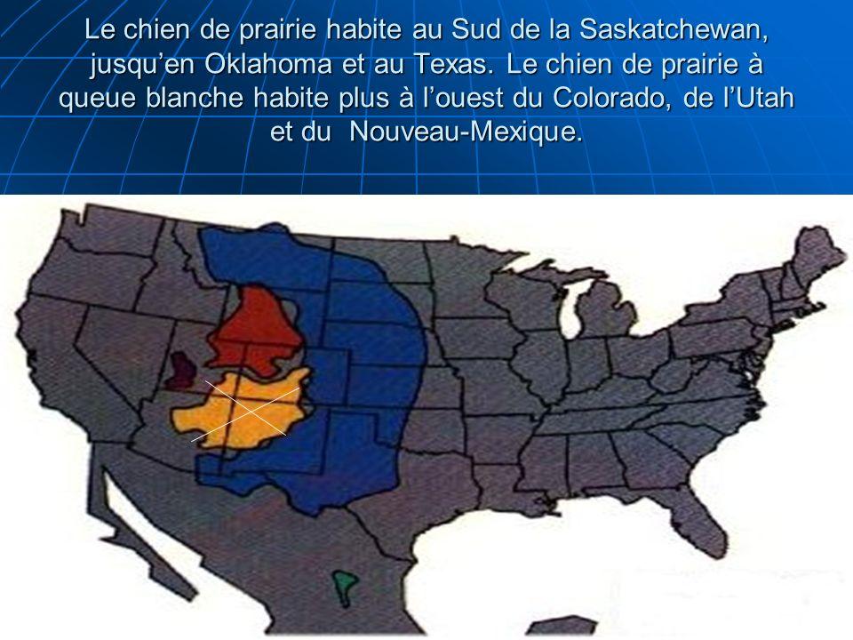 Le chien de prairie habite au Sud de la Saskatchewan, jusqu'en Oklahoma et au Texas.