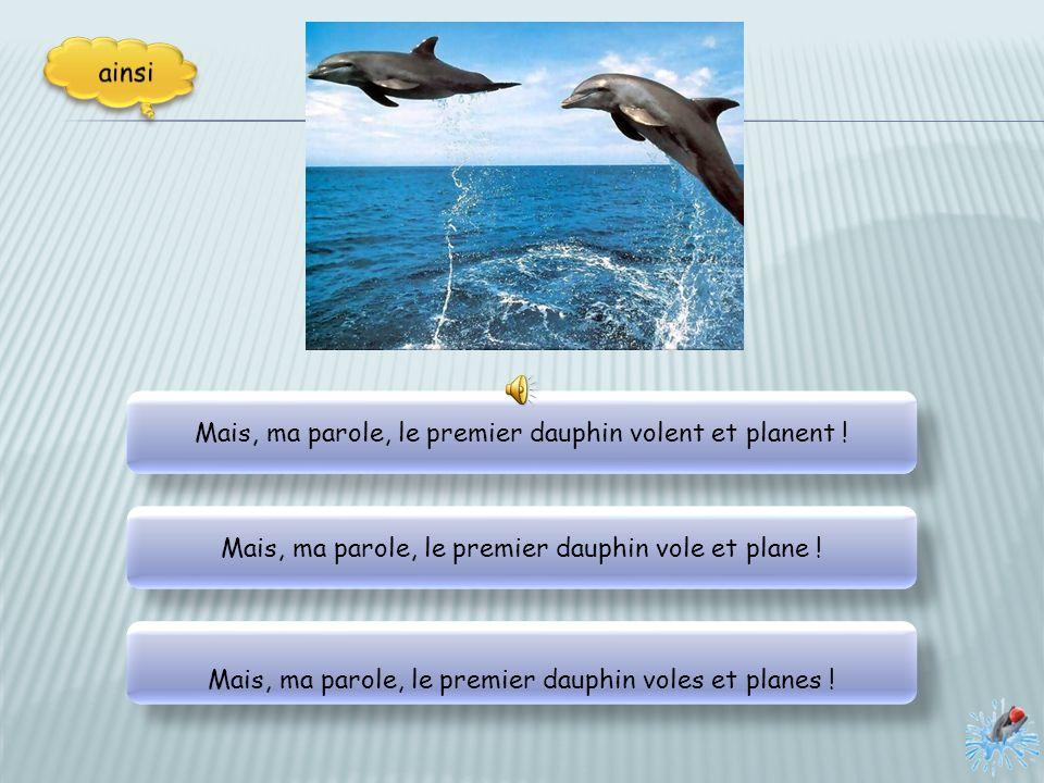 Mais, ma parole, le premier dauphin volent et planent !