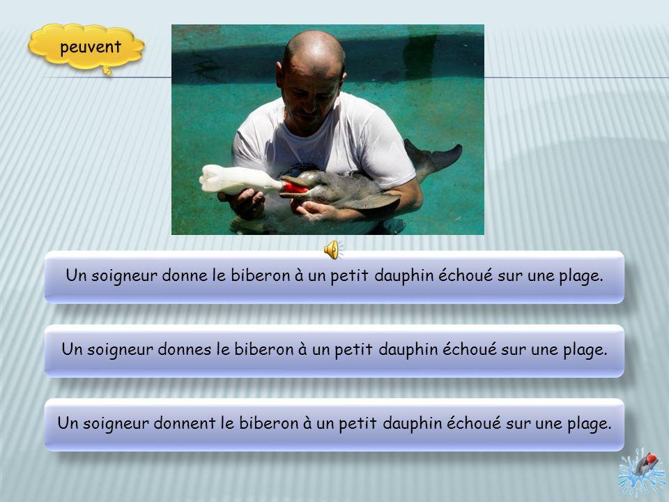 Un soigneur donne le biberon à un petit dauphin échoué sur une plage.