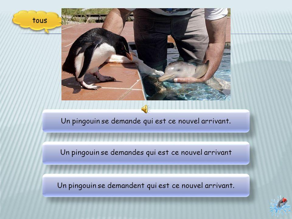 Un pingouin se demande qui est ce nouvel arrivant.