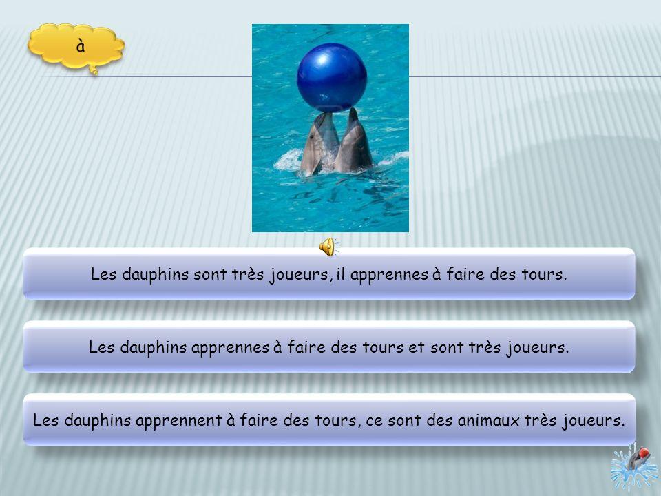 Les dauphins sont très joueurs, il apprennes à faire des tours.