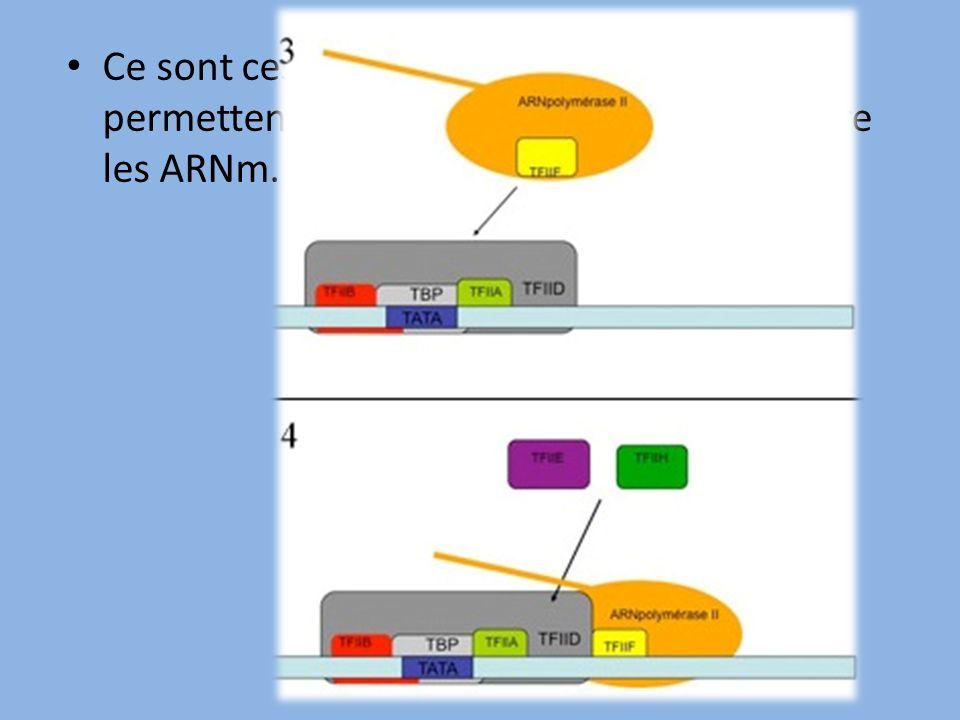 Ce sont ces facteurs de transcription qui permettent à l'ARN polymérase de transcrire les ARNm.