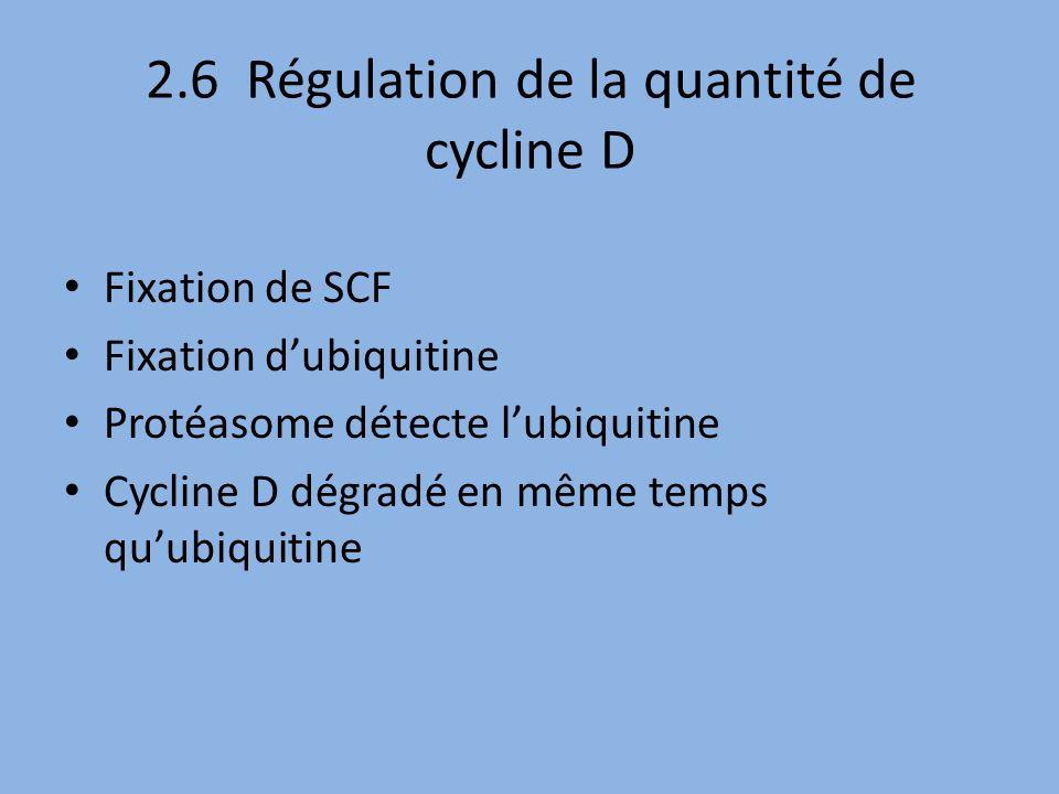 2.6 Régulation de la quantité de cycline D