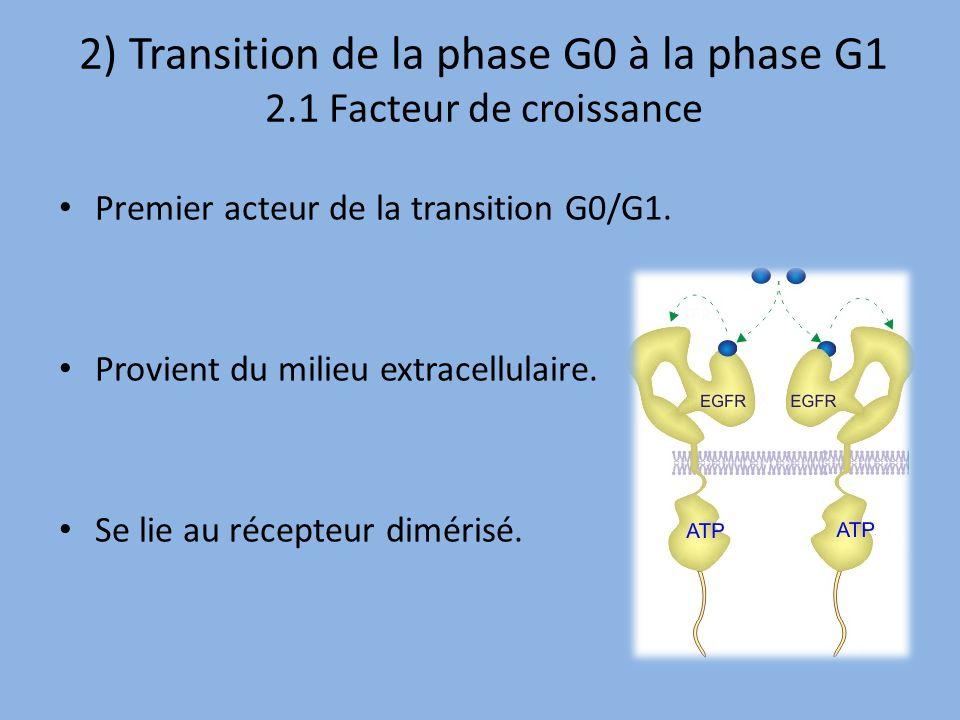 2) Transition de la phase G0 à la phase G1 2.1 Facteur de croissance