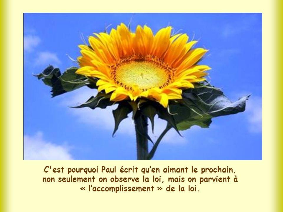 C est pourquoi Paul écrit qu'en aimant le prochain, non seulement on observe la loi, mais on parvient à « l'accomplissement » de la loi.
