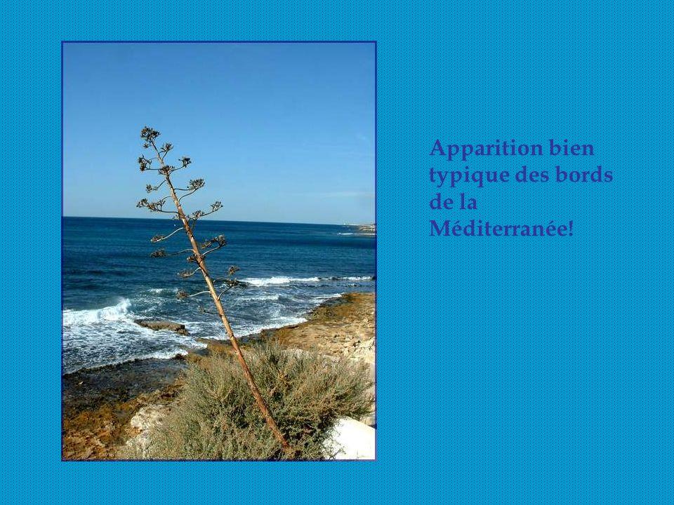 Apparition bien typique des bords de la Méditerranée!