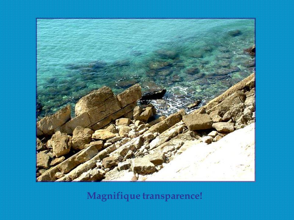 Magnifique transparence!