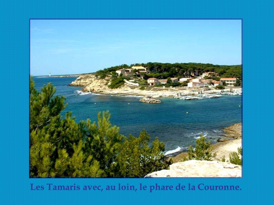 Les Tamaris avec, au loin, le phare de la Couronne.