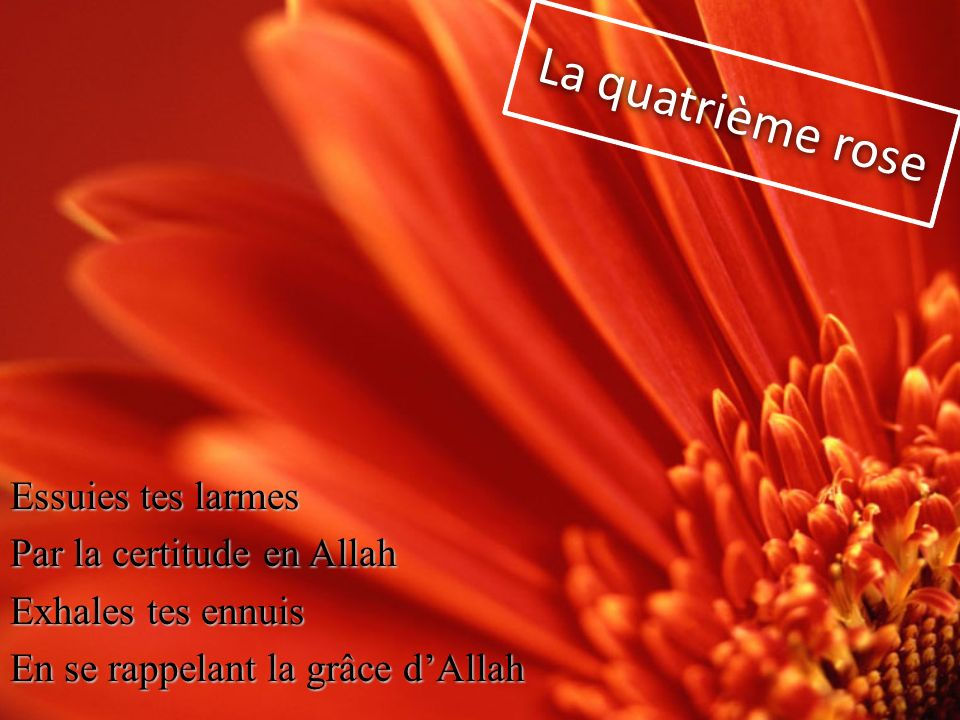 La quatrième rose Essuies tes larmes Par la certitude en Allah Exhales tes ennuis En se rappelant la grâce d'Allah