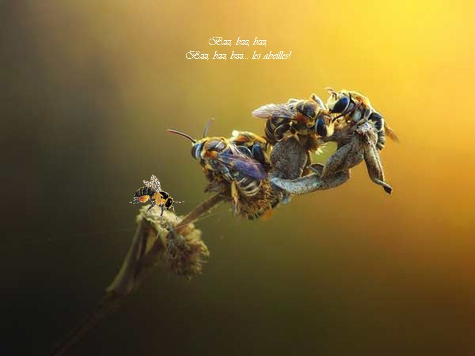 Bzz, bzz, bzz... les abeilles!
