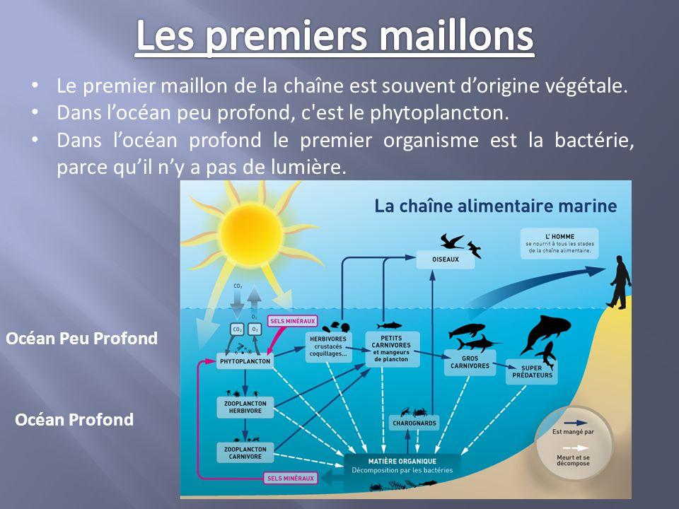 Les premiers maillons Le premier maillon de la chaîne est souvent d'origine végétale. Dans l'océan peu profond, c est le phytoplancton.